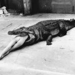 Crocodile / Pina Bauch - fot. H.Newton - Wuppertal, 1983